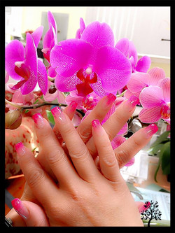 Orchid french
