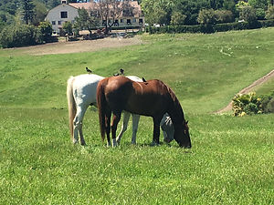Westwind Barn Horses by D. W. Smith
