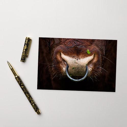 Power - Shorthorn Bull - Notecard