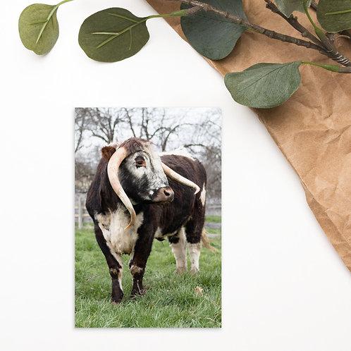 Bloom - English Longhorn - Notecard