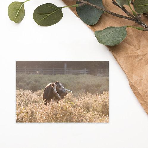The Light - English Longhorn Cow - Notecard