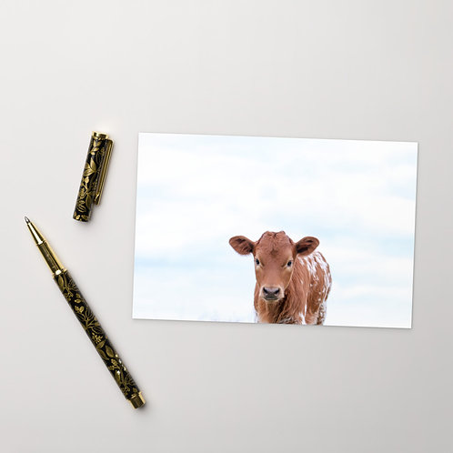 Stare Down - Pineywoods Calf - Notecard