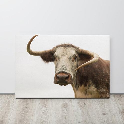 Curious - Longhorn Cow - Canvas