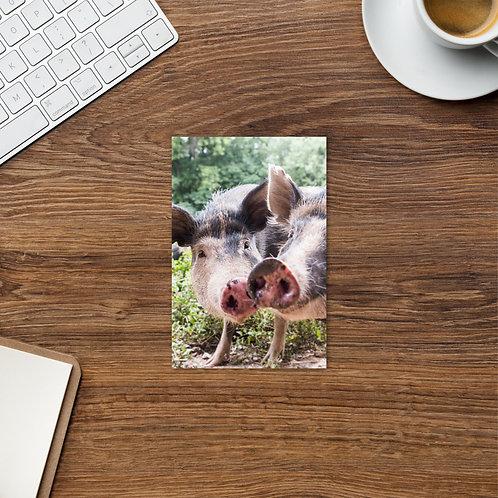 Pigging Around - Ossabaw Hogs - Notecard