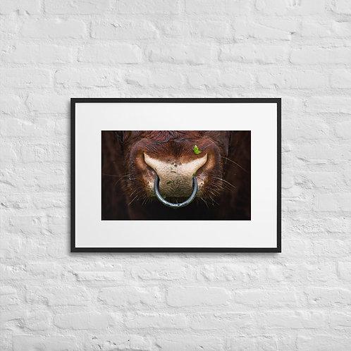 Power - Shorthorn Bull - Framed Poster