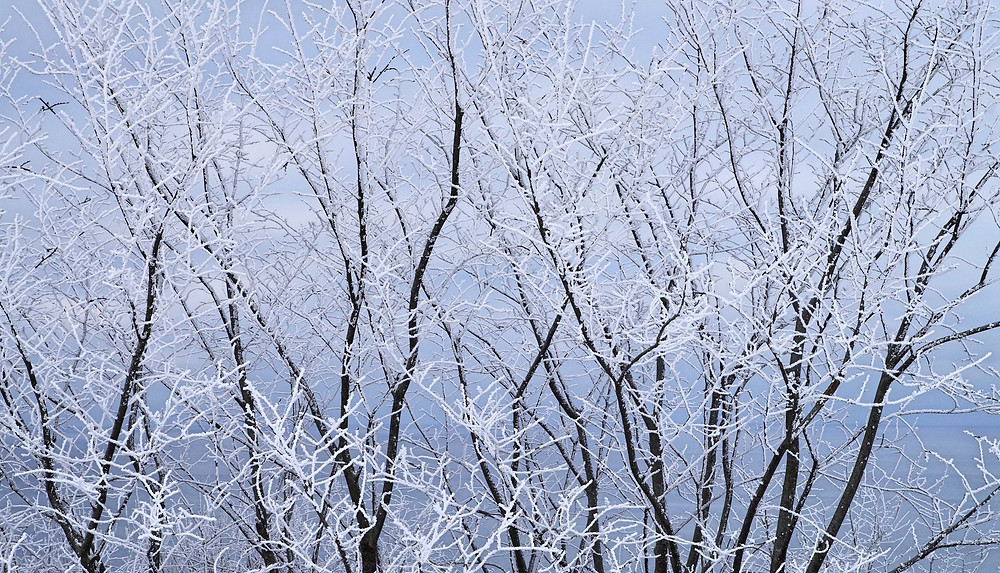 Frozen Trees at Winter Season