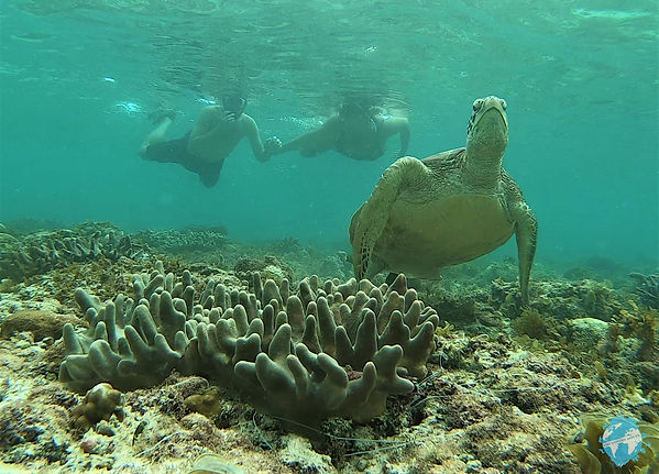 Swim with turtles in Moalboal, Philippines