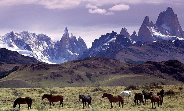 Patagonia Horses.jpg