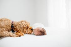 dog and baby photo