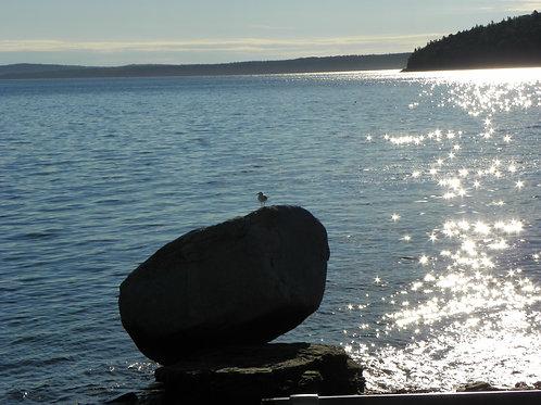 Bar Harbor Maine Shorepath (bh6)