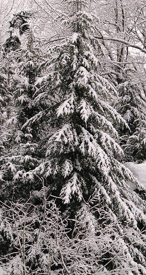Winter Wonderland  (bb15)