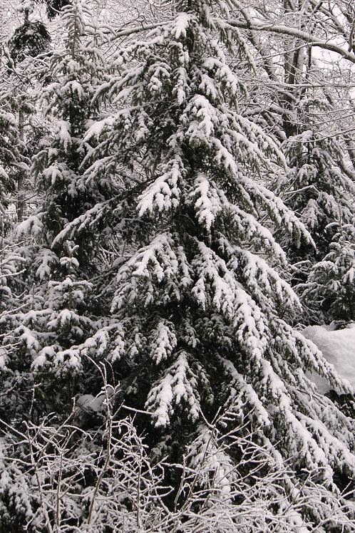 Winter Wonderland  (win6)