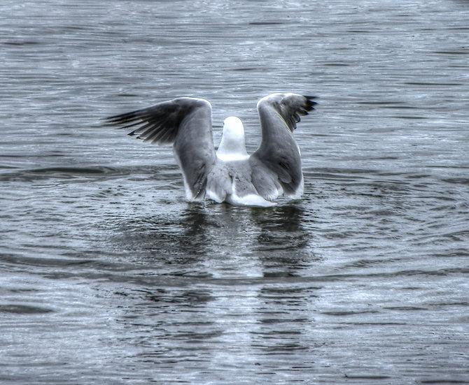 Seagull Landing (bb23)