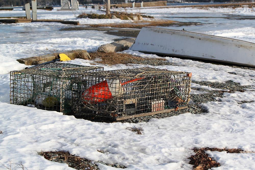 snowy trap.JPG