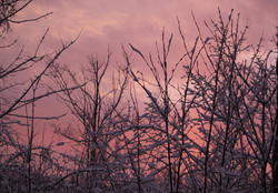 pink sky in the morn