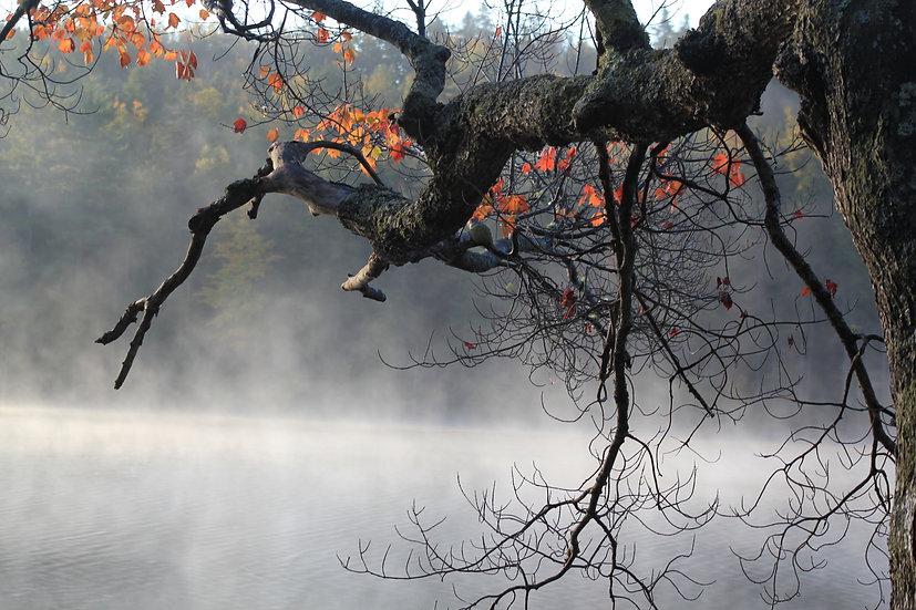 Fall tree and Sea Smoke (bb22)