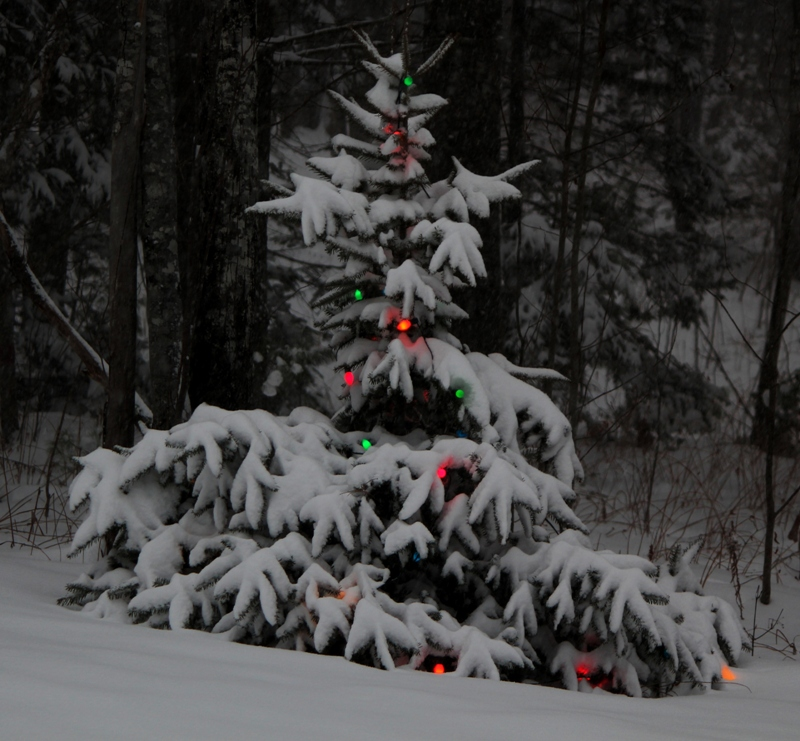 Christmas in the woods