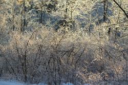 icy wood