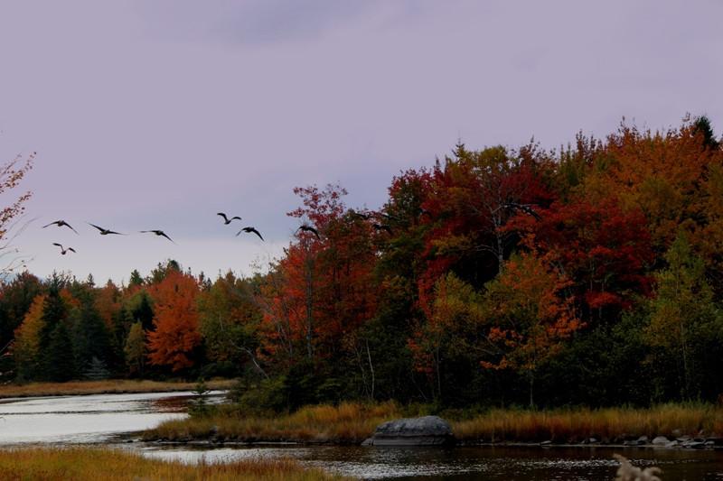 birds migrating.JPG