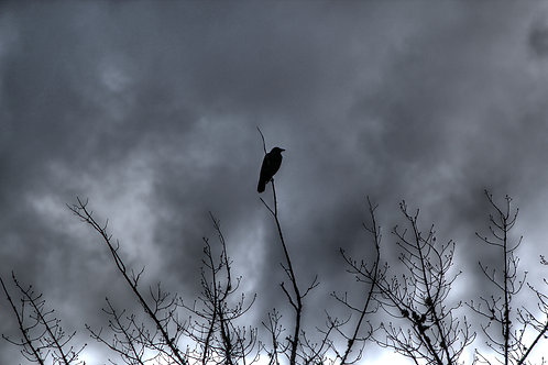 Crow watching over (win7)