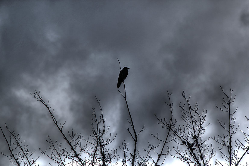 Crow watching over (bb24)