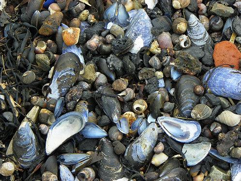 Beach Stones (rc2)