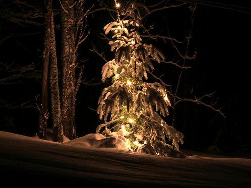Winter Wonderland (win5)