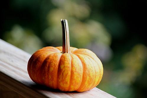 Pumpkin (gar4)