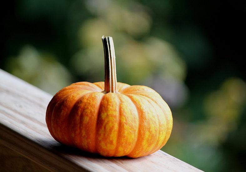 Pumpkin (fl4)