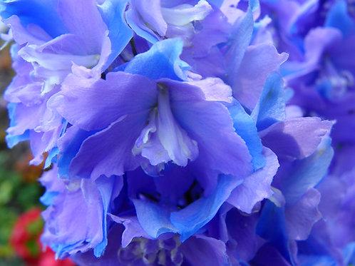 Lavender/Blue Delphinium (fl7)