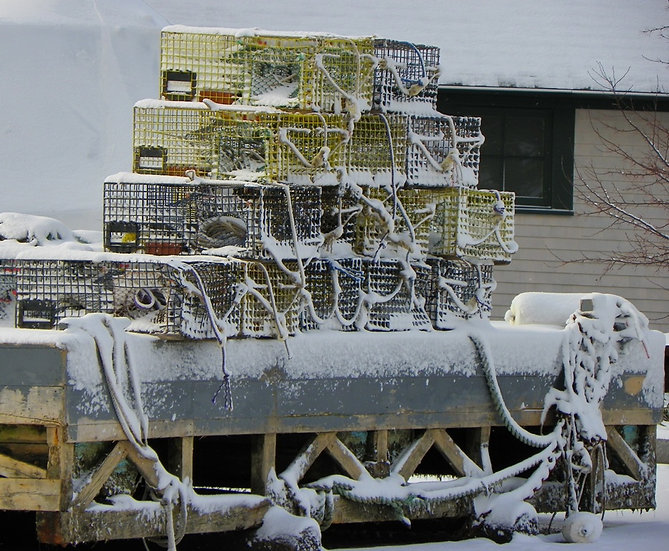 Snowy Lobster Traps (bb27)