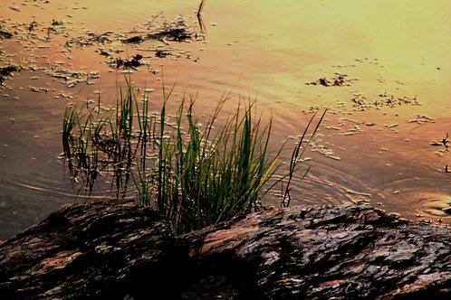 Frenchman Bay Sunset (bb9)