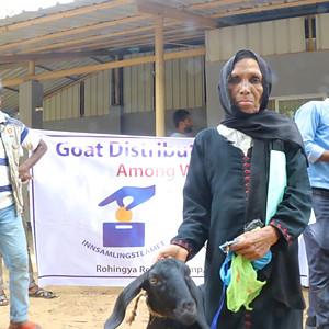Goats for Rohingya widows