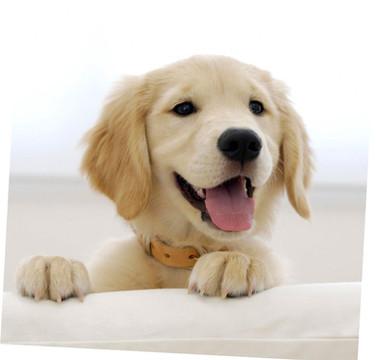 SELF SERVE DOG WASH VIDEO