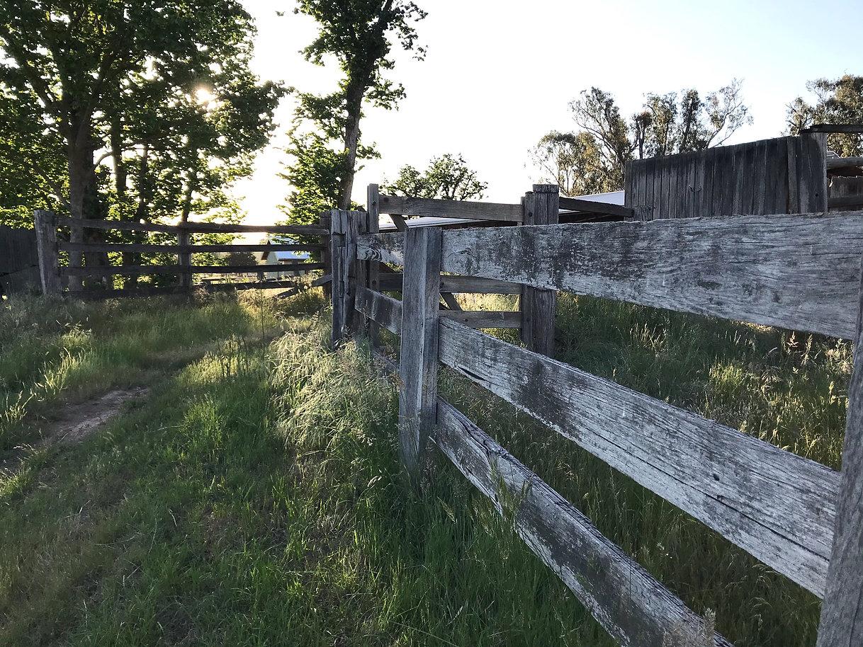 Cattle yards_edited.jpg