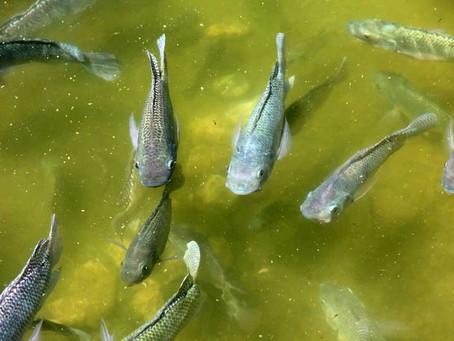 Fish farming!