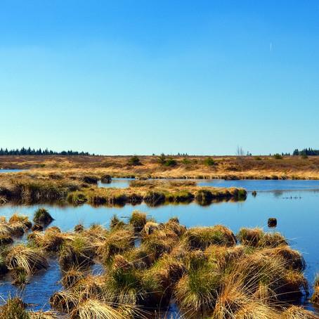 Sabes qué es la lista de Ramsar?