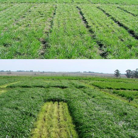 Los cultivos de cobertura y su efecto sobre la microbiota del suelo