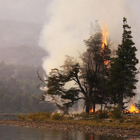 Una APP permite conocer el riesgo de incendios en tiempo real