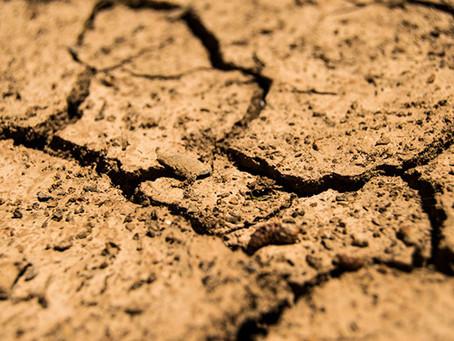 El 75% de la superficie terrestre del planeta se encuentra degradada