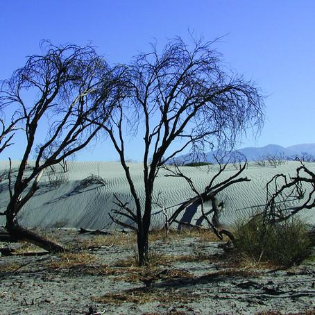 FAO pide a América Latina reducir la deforestación para mejorar el agua
