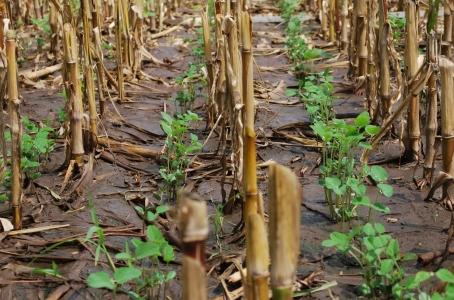 Casi el 40% de los suelos argentinos están afectados por erosión hídrica y eólica.