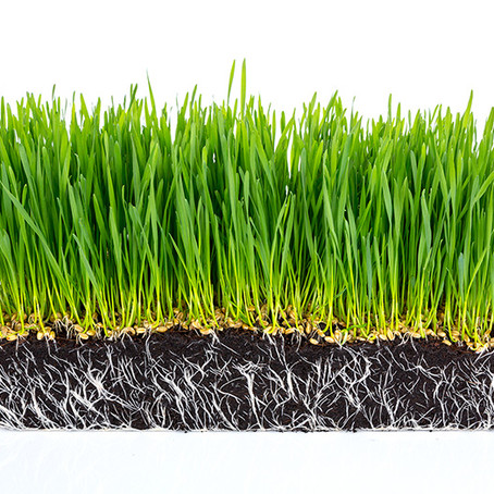 La importancia de las raíces en el control de la erosión de suelos