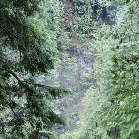 Nueva base de datos para una mejor conservación del bosque seco