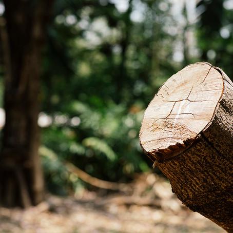 La deforestación en la Amazonia brasileña aumenta un 93 % en lo que va de año