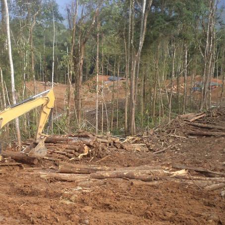 Se pierden siete millones de hectáreas de bosque tropical cada año