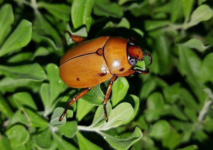 """June bug on green leafy plants"""