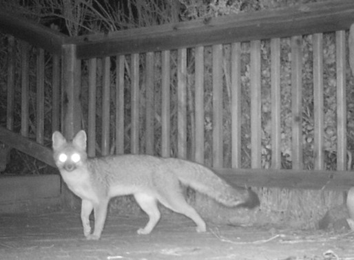 Neighbors: Fox Pays a Visit