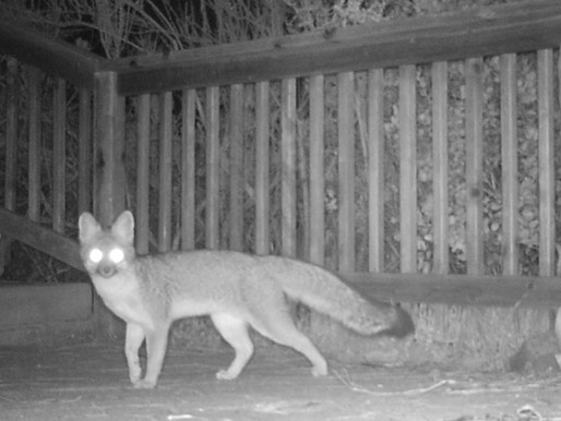 Neighbors: Fox Pays a Visit