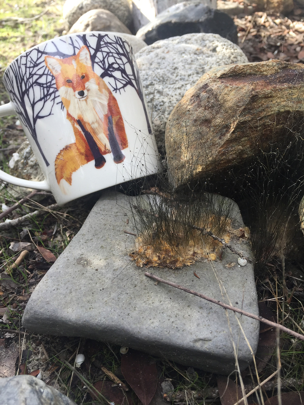 Grey fox scat sprouting and cup with red fox on it.